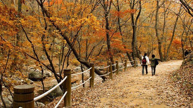 Perubahan warna daun di musim gugur